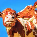 Será que a dieta do leite funciona para perder peso? Esquema e menu de amostras